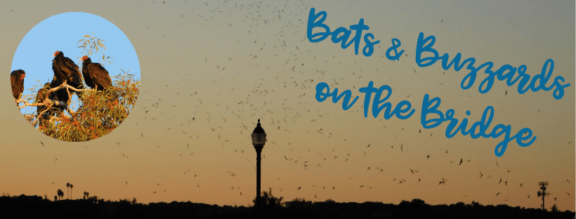 Bats and Buzzards Website Headings